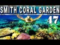 Coron Palawan - Smith Coral Garden