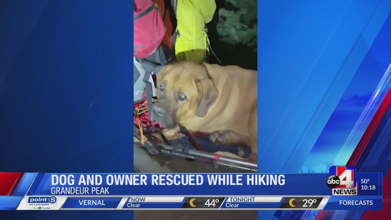 Salt Lake County crews rescue injured 190-pound Mastiff off Millcreek Canyon