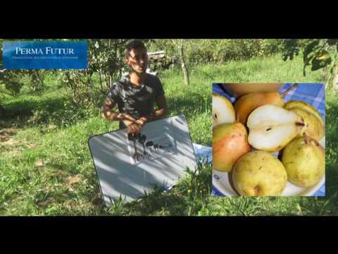 Jardin-forêt comestible / Verger / Permaculture