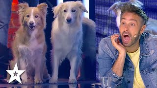 Dancing Dogs WOW Judges on Spain's Got Talent 2021   Got Talent Global