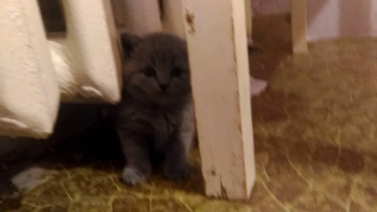 Ксюша с котятами спряталась муська кошка и котята - YouTube