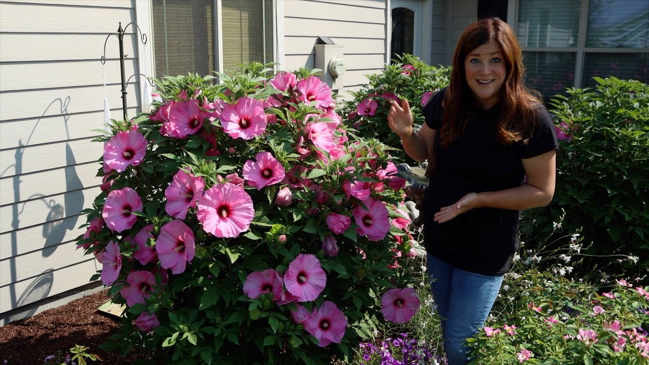 Download Update Tour of the Hibiscus We've Planted the Last Few Years! 🌺😍 // Garden Answer