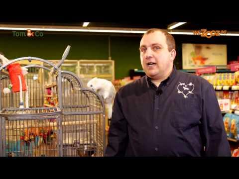 Tom&Co – Papagaai special