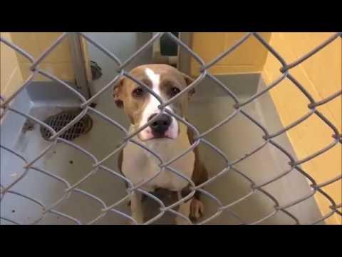 Tulsa Animal Welfare