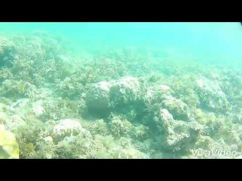Snorkeling its more fun in Romblon Philippines
