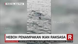 Heboh Penampakan Ikan Raksasa | REDAKSI MALAM (16/02/21)