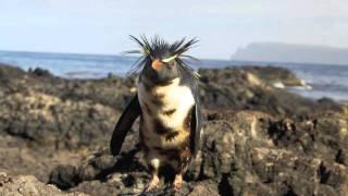 Nightingale Island Oil Spill
