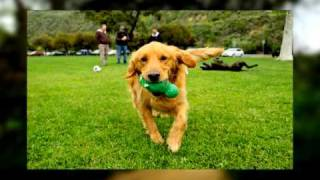 Funny Video-postcards From The Dog Park-rottweiler Puppy-australian Cattle Dog-vizsla-arroyo Verde