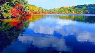 4k Japan Autumn leaves Nature Healing Relaxation 秋 紅葉の白駒池 北八ヶ岳 癒し自然映像 絶景 Shirakomaike Yatsugatake