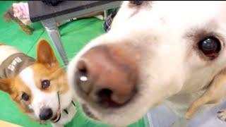 番組提供:ペットライン株式会社(http://www.petline.co.jp/) 子犬と...