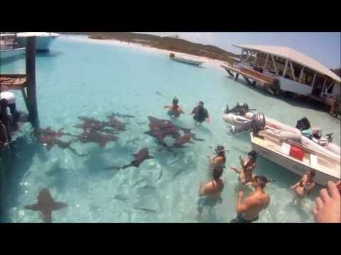 Swimming With Sharks Near Staniel Cay, Exuma Bahamas