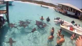 Swimming With Sharks Near Staniel Cay, Exuma Bahamas