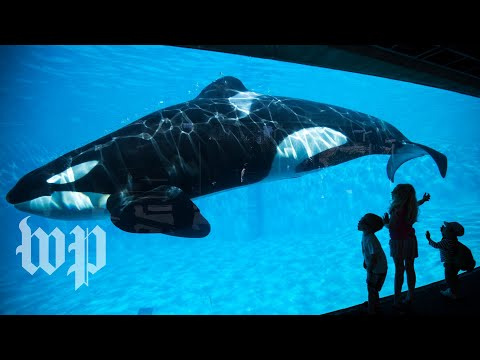 Listen to an orca say 'hello' and 'Amy'