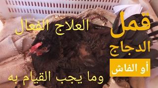 علاج الفاش، علاج قمل الدجاج
