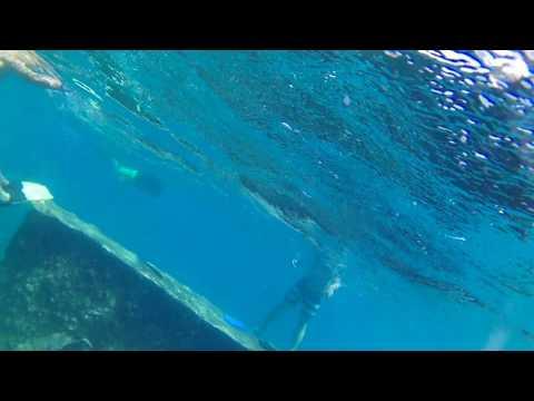 Snorkeling WWII Shipwreck in Aruba