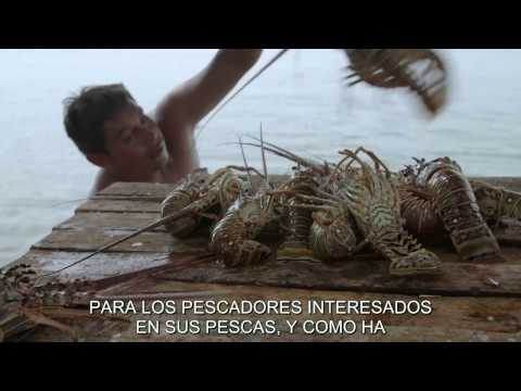 The fisheries of Honduras and Belize