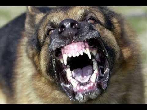 Amazing Electronic Barking Dog Alarm-wireless home security alarm!!