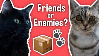 Moving Out & Getting a New Cat