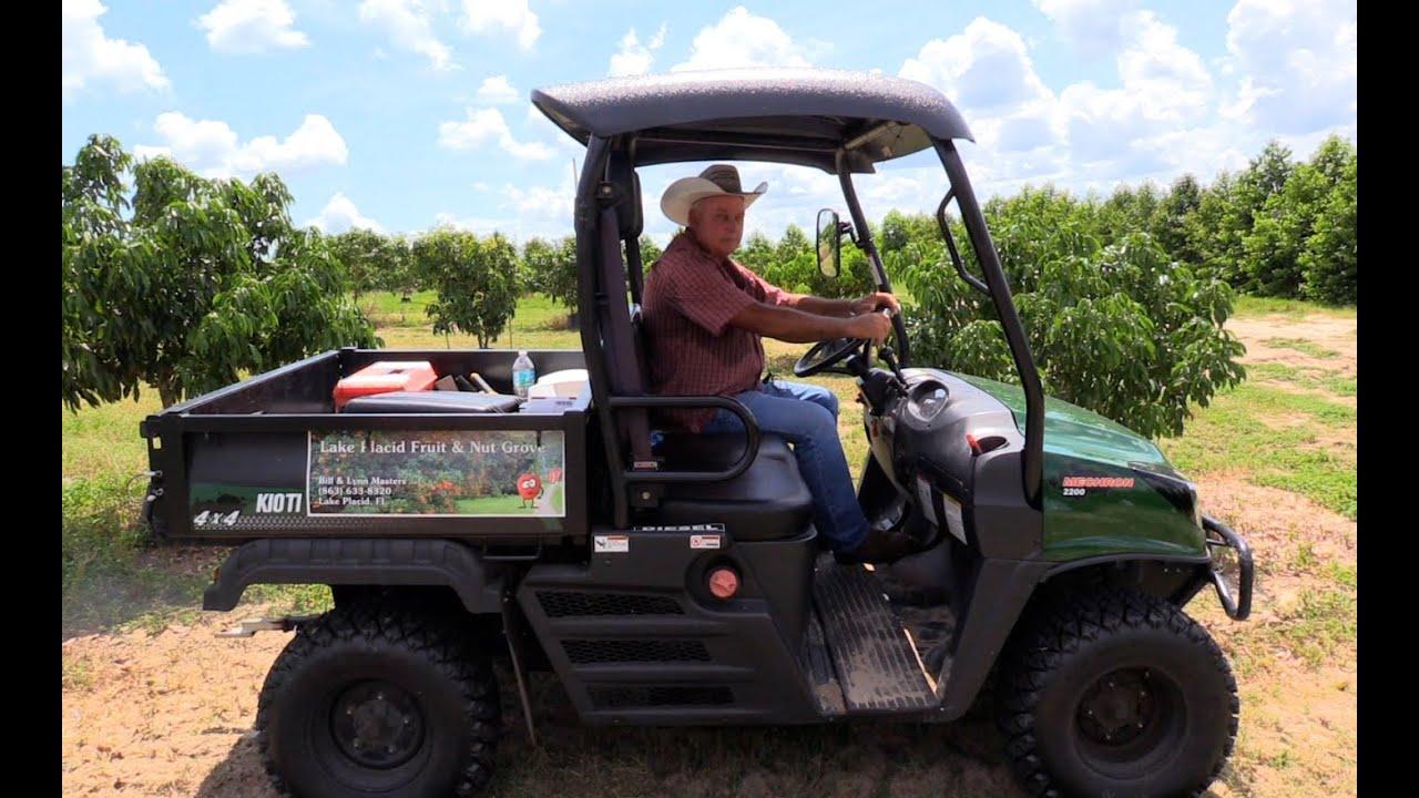 Florida Sweetheart Lychee Farm Youtube