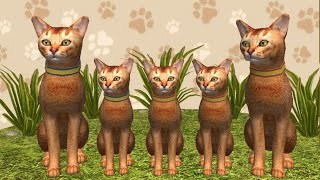 Покупаем Абиссинскую породу в игре Симулятор кота и кошки