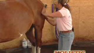 Repeat youtube video How to Massage a Horse
