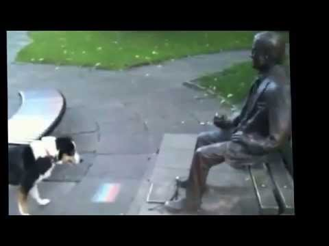 Dog playing fetch with statue
