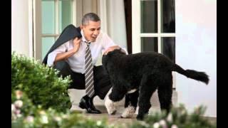Barking for Barack