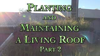 Planting and Maintaining a Living Roof Part 2