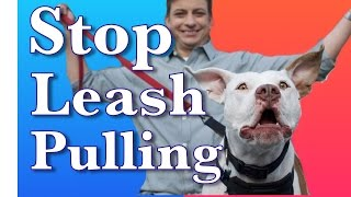 How to Train a Dog to Walk on Leash Without Pulling