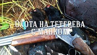 Охота на тетерева с манком