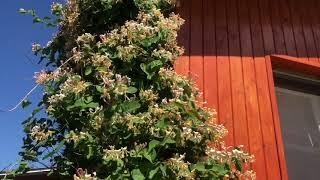 Миняева Юля покажет ВСЕ цветы на Своем  участке !!! / Семейные посиделки