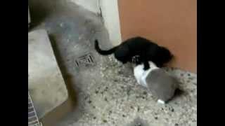 Conejo viola a gato que lo molestaba, gato violado