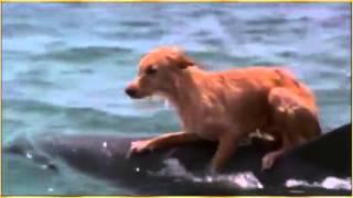 Delphin rettet Hund♡