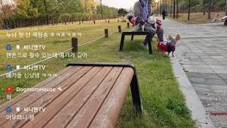 75세할머니와반려견삼남매 산책 생방중 (10/27)방송…