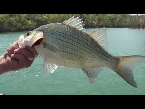 White Bass Fishing After New Years