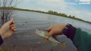 Рыбалка на лучшую приманку для Щуки и окуня. Живцовая удочка в запрет.