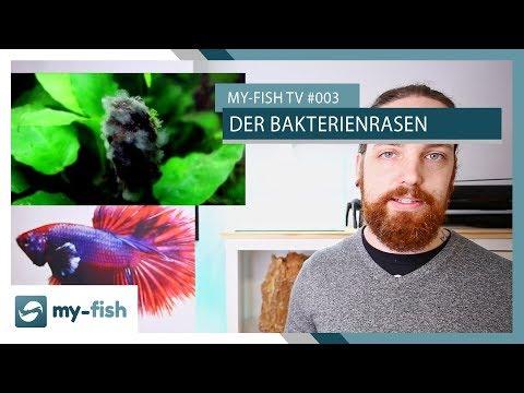 Der Bakterienrasen - Organische Rückstände auf Hölzern und anderen Oberflächen | my-fish TV