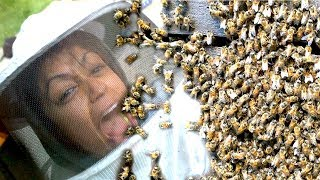 10,000 BEES ATTACK BEEKEEPER LIZA KOSHY
