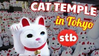 Gotokuji CAT TEMPLE // Maneki Neko Fiesta in Tokyo, Japan