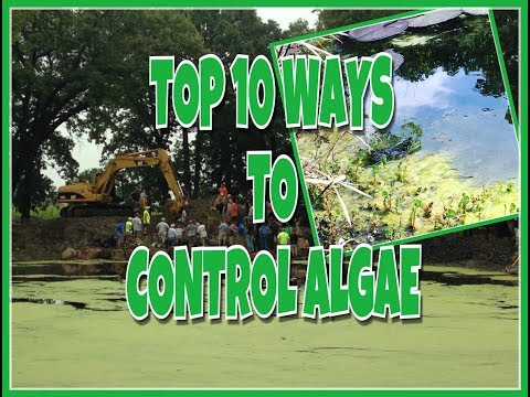 TOP 10 WAYS TO CONTROL POND ALGAE - Plus Two Really Fun Facts!
