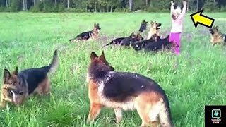 14-german-shepherds-surrounded-the-little-girl-but-when-she-raises-her-hand-they-did-smth-amazing