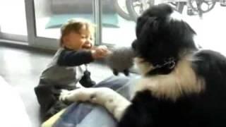 Bambino piccolo gioca e ride da morire con un cane grosso (Terranova)