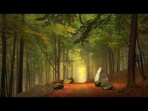Поющий лес Пение вечернего леса Звуки природы Пение птиц релаксация, уединение и расслабление