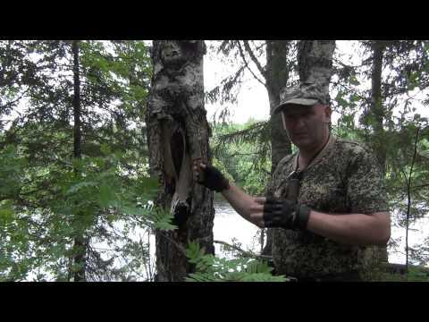 Рецепты препаратов из чаги(березового гриба) - Новые Пути