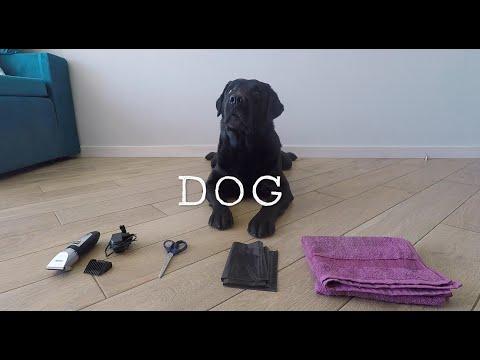 How to groom a dog at home | Labrador retriever home grooming