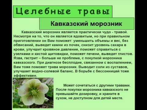 Кавказский морозник