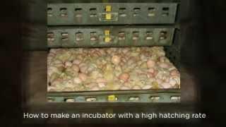 Free Chicken Coop Plans - Hatching Chicken Eggs