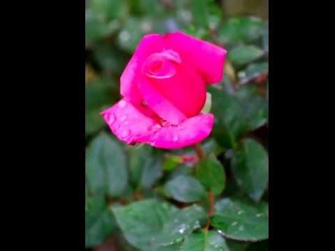 Grace Reiki Burst ~ Karmic Relief and Universal Love