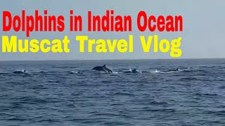 Muscat Visit   Dolphins in the Indian Ocean near Mascat, Oman   Travel Vlogs