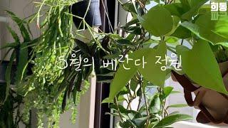 베란다정원 소박한 5월의 베란다 정원을 소개 합니다!